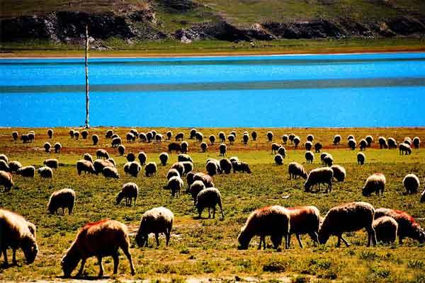 成都到川藏线旅游包车沿途风景