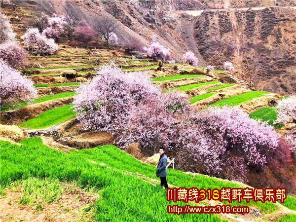 林芝桃花山顶图