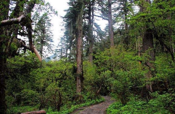 米堆冰川13原始森林.jpg