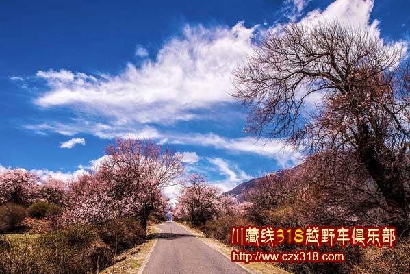 波密1桃花沟风景区.jpg