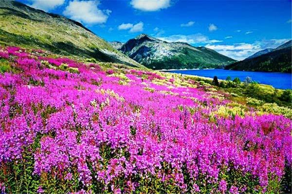 木格措风景13红海草原.jpg