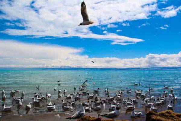 青海湖20鸟岛风景区.jpg