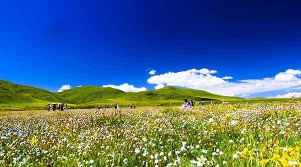 —【查真梁子】(海拔4345米),后来到红原县壤口【俄木唐草原花海