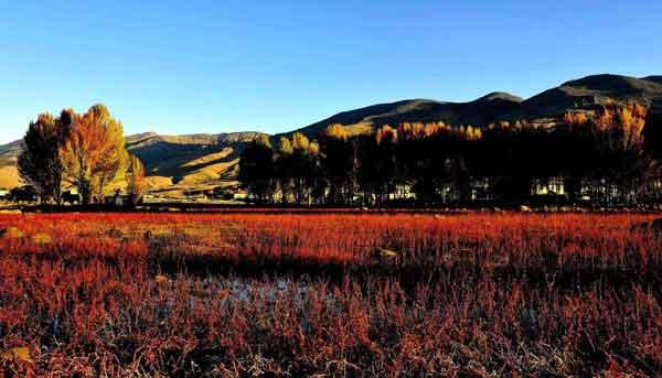 桑堆红草地