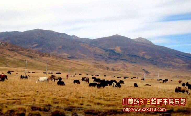 毛垭大草原