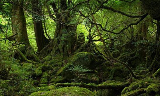 原始的森林风景